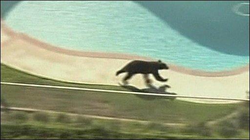Bear in LA