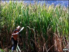 Sugar cane worker