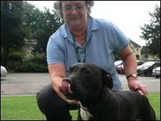 Animal warden Sue Knight with Diesel the staffordshire bull terrier
