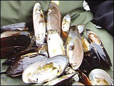 Some of the opened mussels (Pic: Dr Peter Cosgrove)