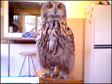 Bubo the eagle owl