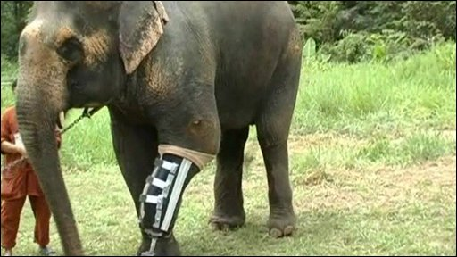 Motola the elephant
