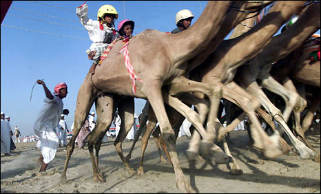 Kamelenrace!