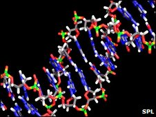 DNA molecular structure (SPL)