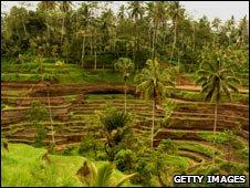Bali rice terrace, Indonesia, 2003