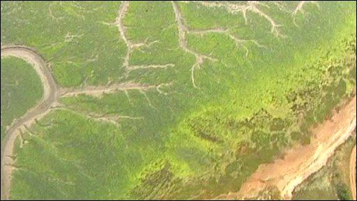 Algae from the air