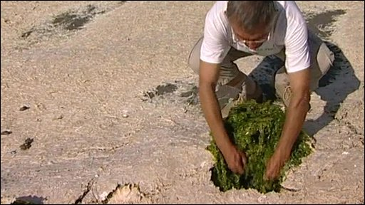 Toxic seaweed campaigner Andre Ollivro digs up algae
