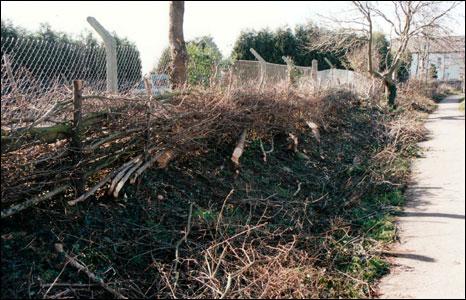 Phoenix Hedge