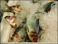 Fish in box of ice