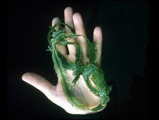 A hand holds the killer algae