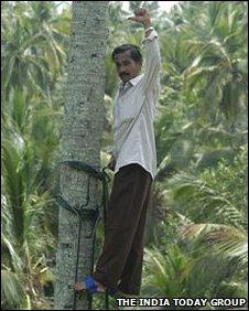 Coconut picker in Kerala