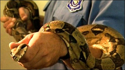 Police officer with python