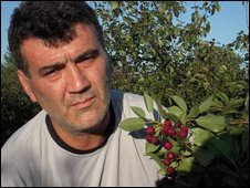 Zivorad Kosovic and his cherry trees
