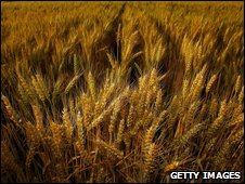 File photo of wheatfield in California