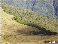 Abrupt treeline