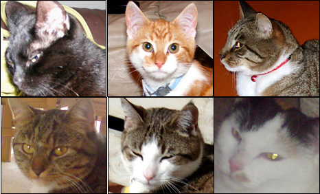 Top row L-R: Kiwi, Chilli and Horace.  Bottom row L-R: Willow, Minty and Waffle.