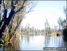 Axolotl habitat in the Xochimilco area of the Mexican Central Valley