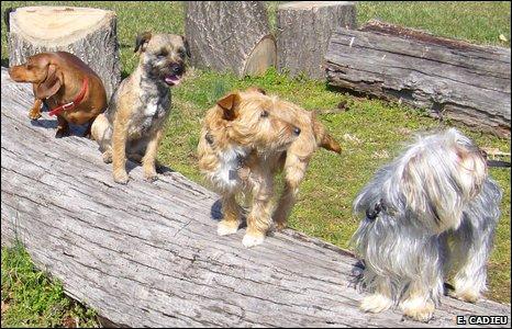 Dogs (E. Cadieu)