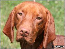 Dog (T. Spady)
