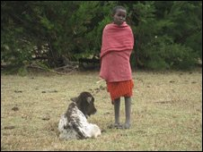 A Maasai with dying calf, Kenya