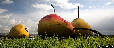 Giant model pears