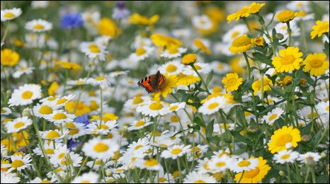 Wildflowers. Image courtesy of Scarborough in Bloom