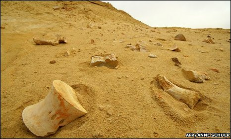 Ancient fossils in the sand at Bentiaba in the southern desert province of Namibe, Angola