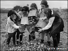 Evacuated Ilford schoolgirls collecting together their potato crop harvest in Buckinghamshire (14 October 1943)