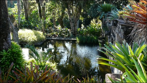 Lush vegetation at the Sitio Roberto Burle Marx