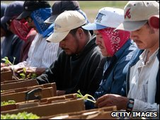 Hispanic migrant workers in North Carolina
