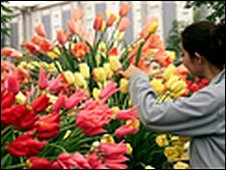 Flowers and woman preparing for Chelsea Flower Show