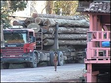 Young village boy passed by articulated lorries carrying wood from the Amazon
