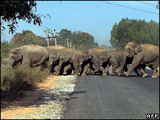 Elephants crossing road in India (File picture)