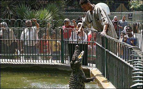 An Egyptian zookeeper feeds a Nile crocodile at Giza zoo in Cairo 14 August 2007