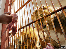 Lion's cage at Giza Zoo