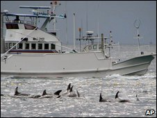 A fishing boat sails to catch whales off Taiji, Wakayama Prefecture, western Japan