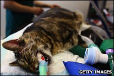 Cat in a state-of-the-art operating theatre