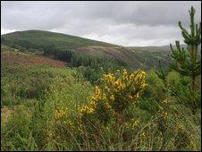 Coed y Brenin forest