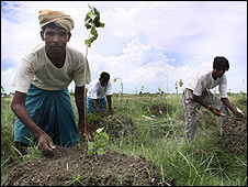 Tree planiting in Bihar