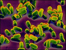 The bacteria which causes bubonic plague