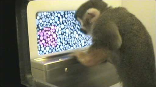 Monkey performs colour blind test
