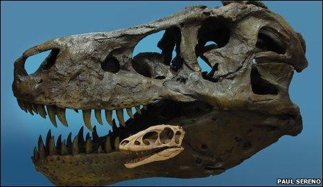 raptorex skull