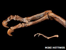 raptorex arm