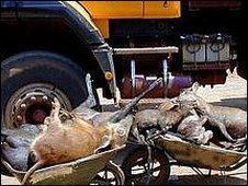 Wheelbarrows of bushmeat in the Congo (credit: Sarah Elkan)