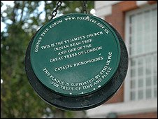 A Great Tree of London Plaque