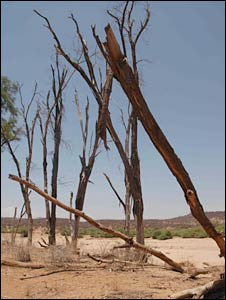 Dead trees line a river in the Samburu National Park