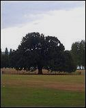 The Bexley Charter Oak