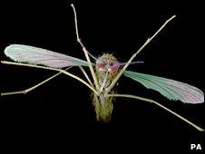 Mosquito, file image