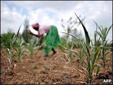 Farmers planting crops in Kenya