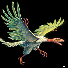 Artist's representation of Archaeopteryx